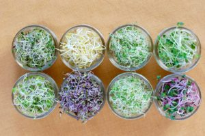 8 small jars filled with various types of seed sprouts