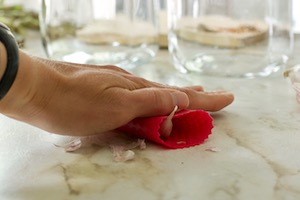 rolling garlic peeler with hand